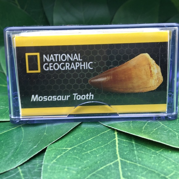 National Geographic Other - National Geographic Real Dinosaur Tooth-Mosasaur